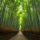 Bamboo Grove by TTAN