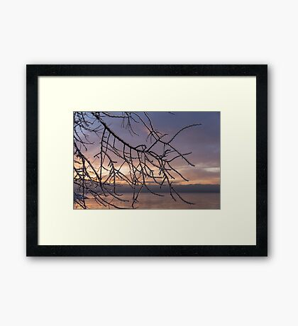 Beautiful Aftermath of an Ice Storm - Branch Pattern on Rosy Blues - Right Framed Print