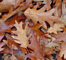 Fallen leaves Sticker