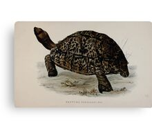 Tortoises terrapins and turtles drawn from life by James de Carle Sowerby and Edward Lear 011 Canvas Print