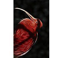Red neon Bird Photographic Print