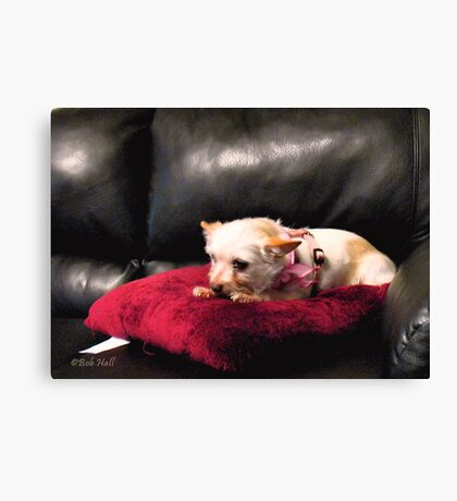 """""""Queen of the Couch""""... prints and products Canvas Print"""