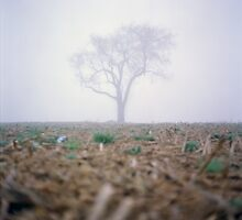 Tree in the Fog by DanielRegner