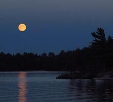 Harvest moon by Janet Gosselin