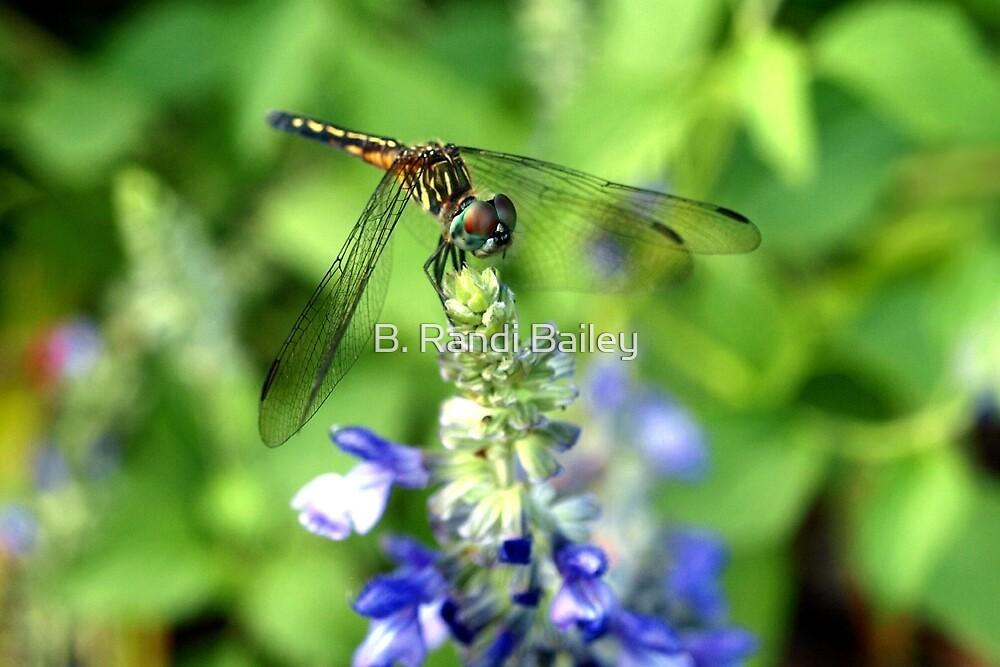 Dragonfly on Sage by ♥⊱ B. Randi Bailey