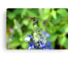 Dragonfly on Sage Canvas Print