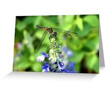 Dragonfly on Sage Greeting Card
