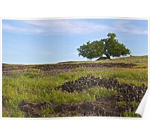 Tree in a Wildflower Meadow Poster