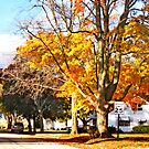 November in the Heartland by Nadya Johnson