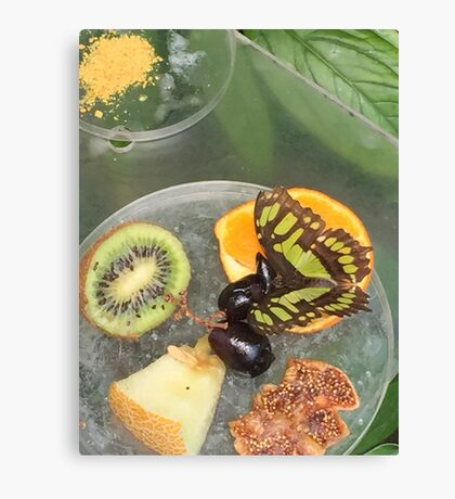 Fruit Butterfly  Canvas Print