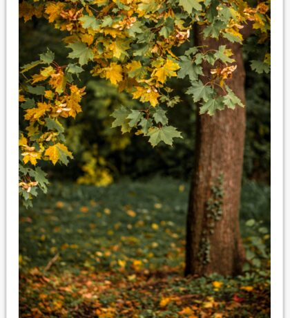 Autumn landscape with orange autumn oak tree in the field Sticker