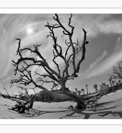 Hunting Island Beach And Driftwood Beaufort SC Black And White Sticker