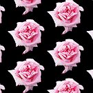 Pink Rose by appfoto