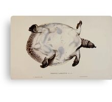 Tortoises terrapins and turtles drawn from life by James de Carle Sowerby and Edward Lear 053 Canvas Print
