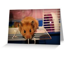 Syrian Hamster Greeting Card