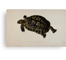 Tortoises terrapins and turtles drawn from life by James de Carle Sowerby and Edward Lear 017 Canvas Print