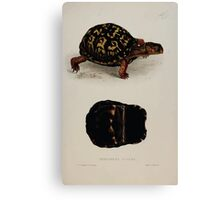 Tortoises terrapins and turtles drawn from life by James de Carle Sowerby and Edward Lear 022 Canvas Print