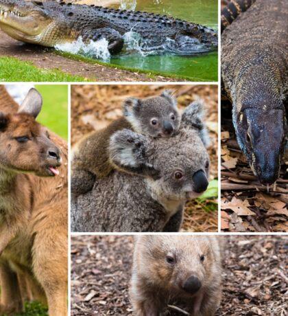 Photo collage of Australian native wildlife Sticker
