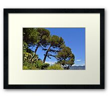 Beautiful natural landscape with threes and the sea in Portofino, Italy Framed Print