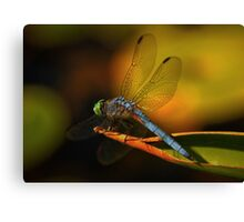 Dragonfly in Kaleidiscope Canvas Print