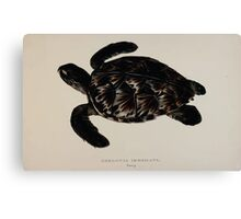 Tortoises terrapins and turtles drawn from life by James de Carle Sowerby and Edward Lear 057 Canvas Print
