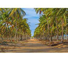 Topical Landscape Scene at Porto Galinhas Brazil Photographic Print