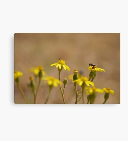 Yellow Flowers and a little Friend Canvas Print