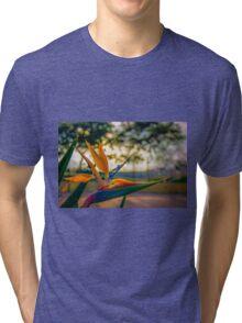 Backlit Bird of Paradise  Tri-blend T-Shirt