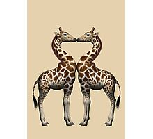 Giraffes In Love Photographic Print