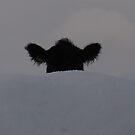 Peek a Boo by KMorral