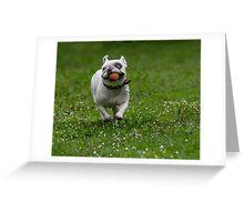 French bulldog running in the garden Greeting Card