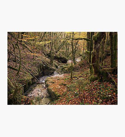 Autumn colors along Abime river Photographic Print