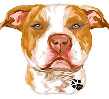 Pit Bull Red by pitbullhill