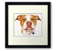 Pit Bull Red Framed Print