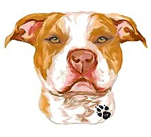Pit Bull Red Photographic Print