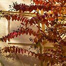Dainty Branches - Warm Fall Colors - Washington, DC Facades by Georgia Mizuleva