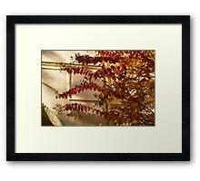Dainty Branches - Warm Fall Colors - Washington, DC Facades Framed Print