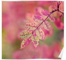 Bilberry Autumn Leaves Poster