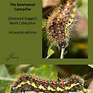 Smartweed moth caterpillar by DigitallyStill