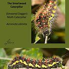 Smartweed moth caterpillar by DigitallyStill