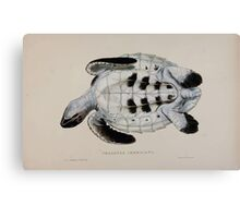 Tortoises terrapins and turtles drawn from life by James de Carle Sowerby and Edward Lear 058 Canvas Print