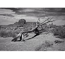 Gnarled Beauty In the Valley Photographic Print
