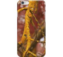 Textures and colours of lichen iPhone Case/Skin