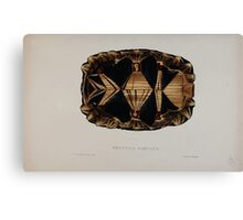 Tortoises terrapins and turtles drawn from life by James de Carle Sowerby and Edward Lear 010 Canvas Print