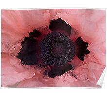 Poppy Crown Poster