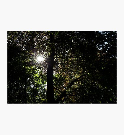 sunburst, fyvie woods Photographic Print