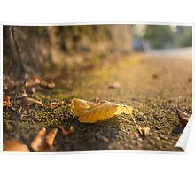 Autumnal coloured leaf Poster