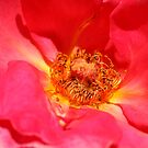 Rose Garden 12-15 by beeden