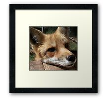 Rusty the Red Fox Framed Print