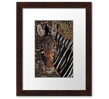 Chobe Zebra - Coloured Pencil Framed Print